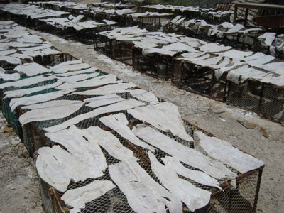 drying salt fish. Isla Mujeres, Mexico