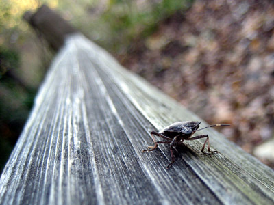 Bug on a fence at Oaks Bottom Wildlife Refuge, Portland Oregon