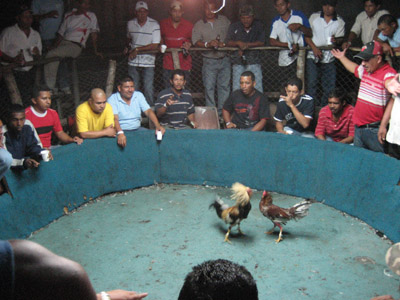 Cock fight ring. Panama