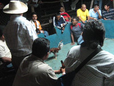 Cock fight spectators. Panama