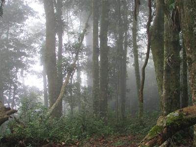 Cloud Forest in Honduras