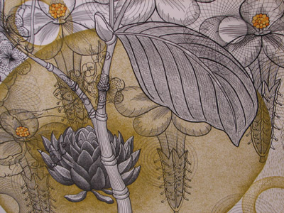 Nancy Blum Botanical Drawing